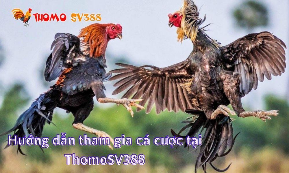 Hướng dẫn tham gia cá cược tại ThomoSV388