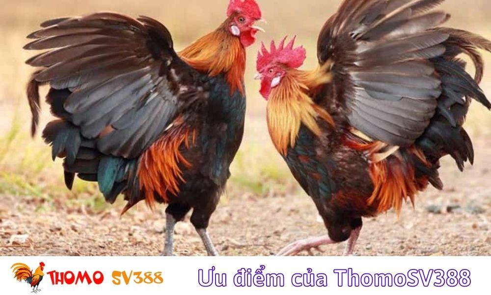 Ưu điểm của ThomoSV388